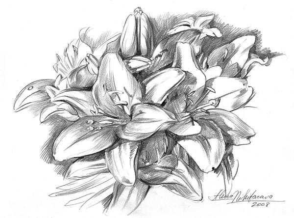 Lily greeting card featuring the drawing conte pencil sketch of lilies by alena nikifarava boundary bleed area may not be visible