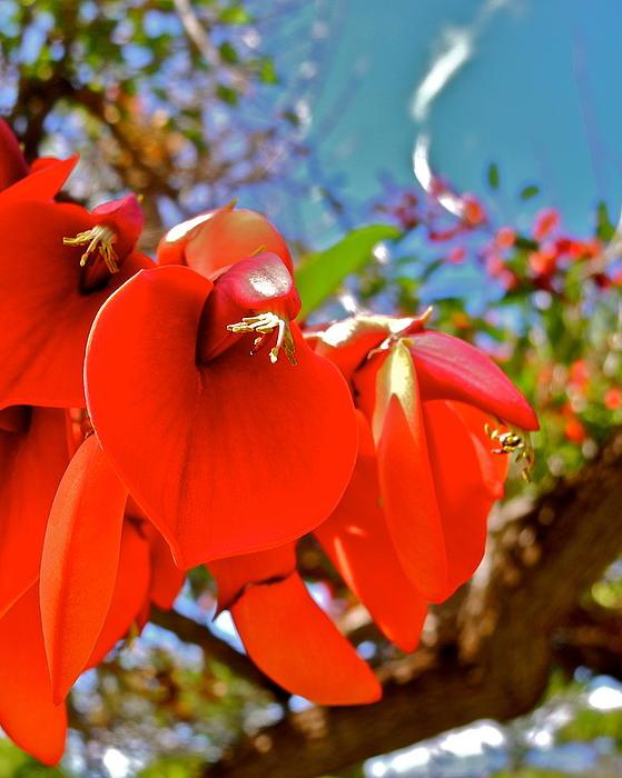 Kirsten Giving - Coral Tree Flowers