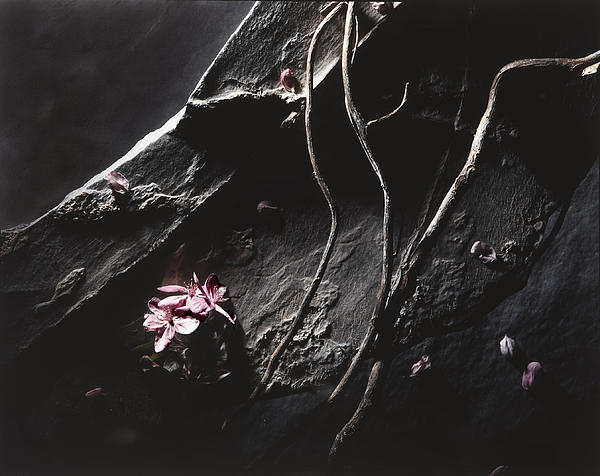 Greg Kopriva - Crabapple and Slate