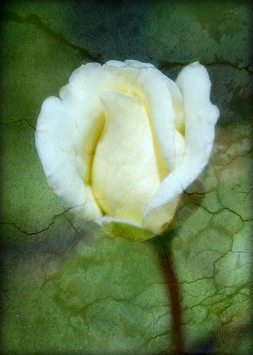 Cindy Wright - Cracklin Rose