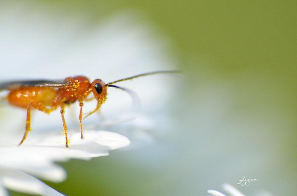 Bogdan Zagan - Critter on a flower