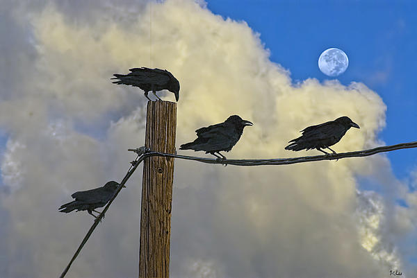 Brian Lambert - Crows Moon
