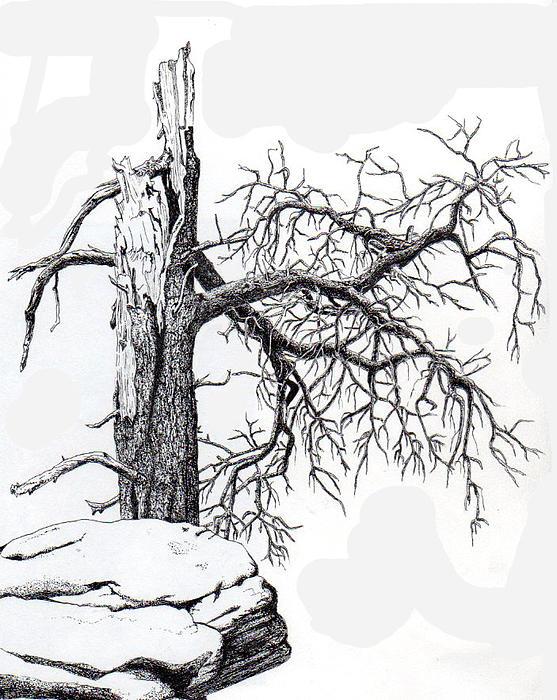 Inger Hutton - Dead Tree