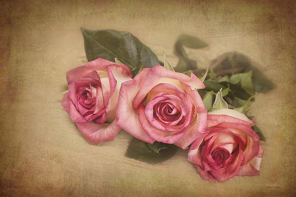 Cheryl Davis - Delicate Roses