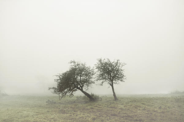 John Gordon - Derbyshire Mist 3