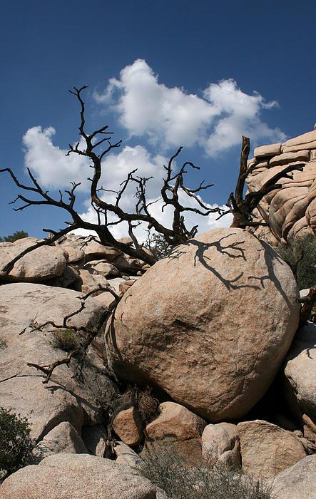 Karen Harrison - Desert Tree