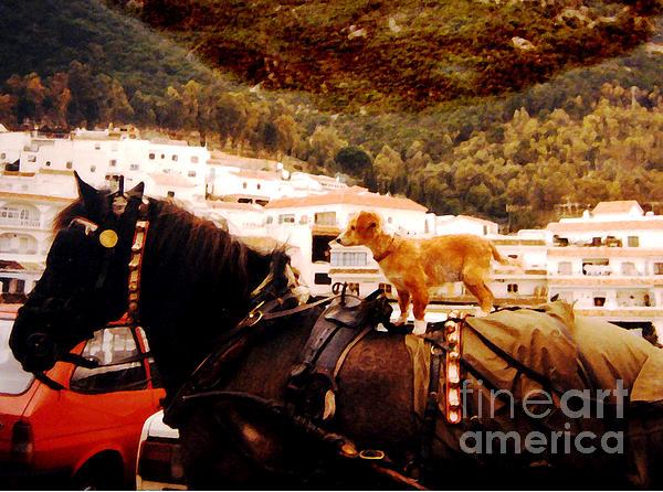 Patricia Januszkiewicz - Dog and Horse
