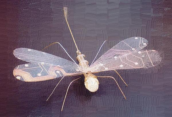 Max Shkoropado - Dragonfly