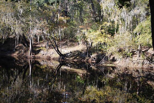 Judy Hall-Folde - Dying River