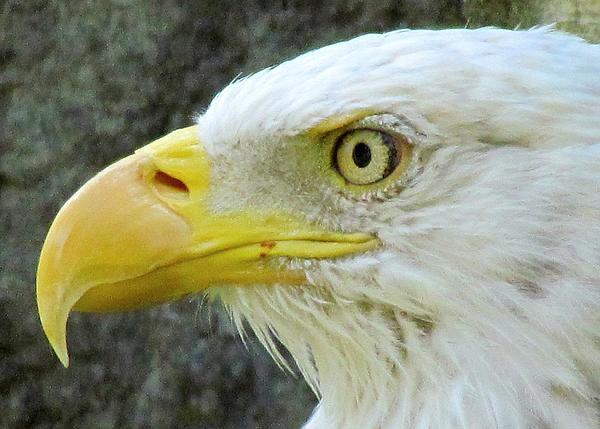Lori Pessin Lafargue - Eagle Eye