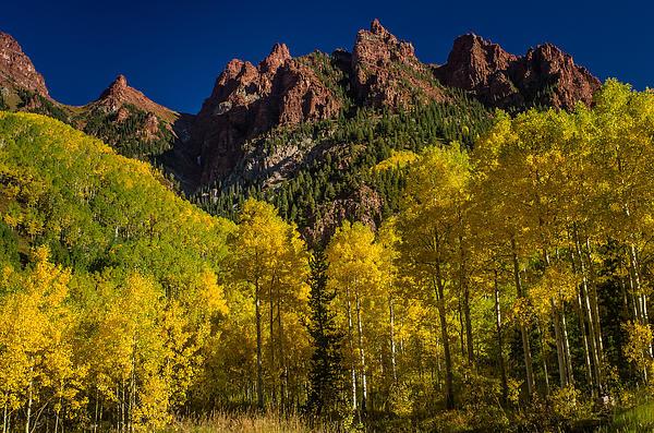 Greg Nyquist - Elk Mountain Aspens in Autumn