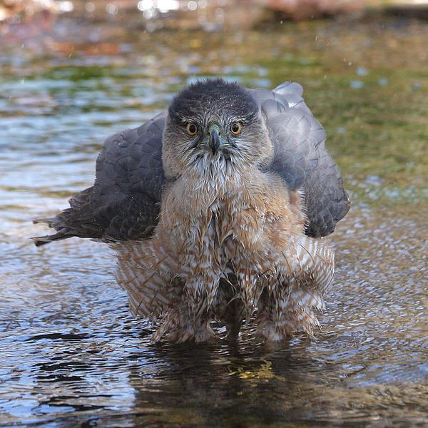 Doris Potter - Excuse me but I am bathing here.