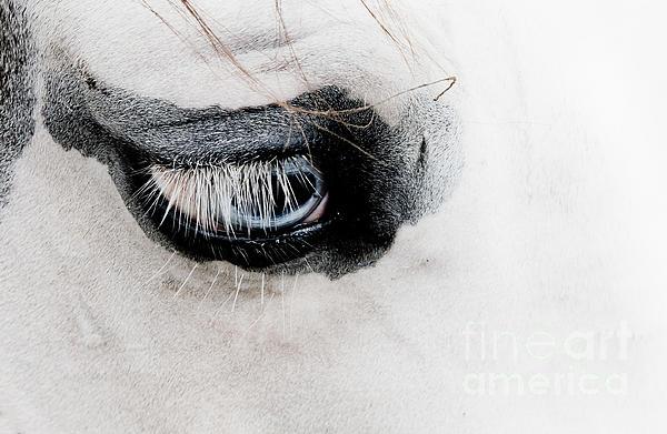 Toni Thomas - Eye of the Horse