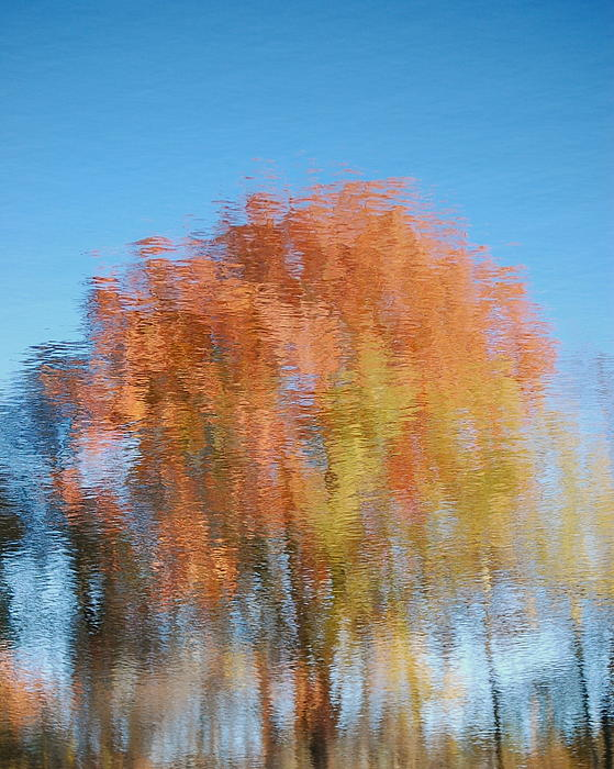 Mary McAvoy - Fall Watercolor - inverted