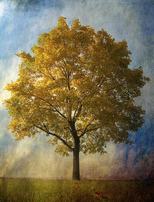 Larysa Luciw - Fall Yellow