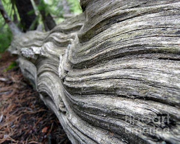Minden Ten Eyck - Fallen Tree II