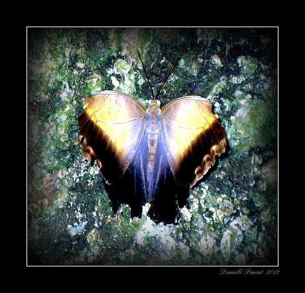 Danielle  Parent - Fantasia Butterfly