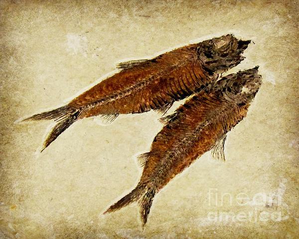 Barbara Henry - Fish Fossil