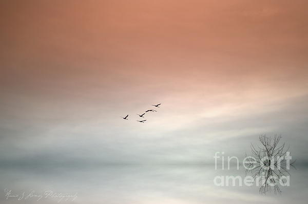 Annie Lemay - Flight of the Swans