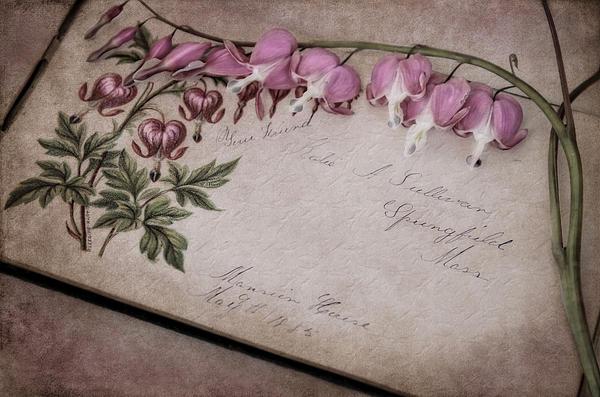 Robin-Lee Vieira - Floral Album Friends 1883-1885