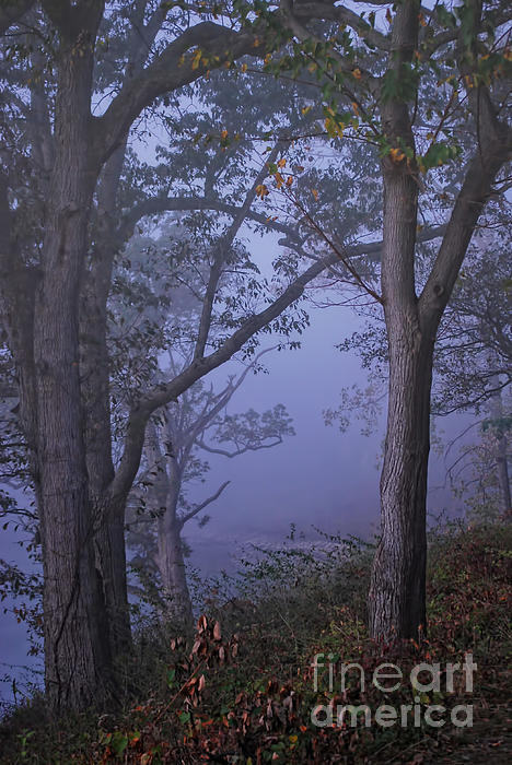 Pamela Baker - Foggy Fall Morning