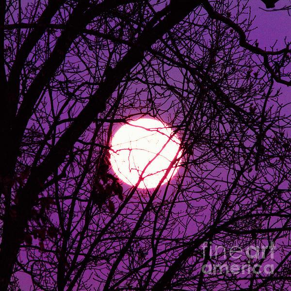 Kim Fearheiley - Full Moon
