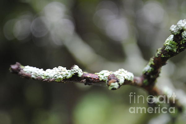 Mia Hopkins - Fungus on branch