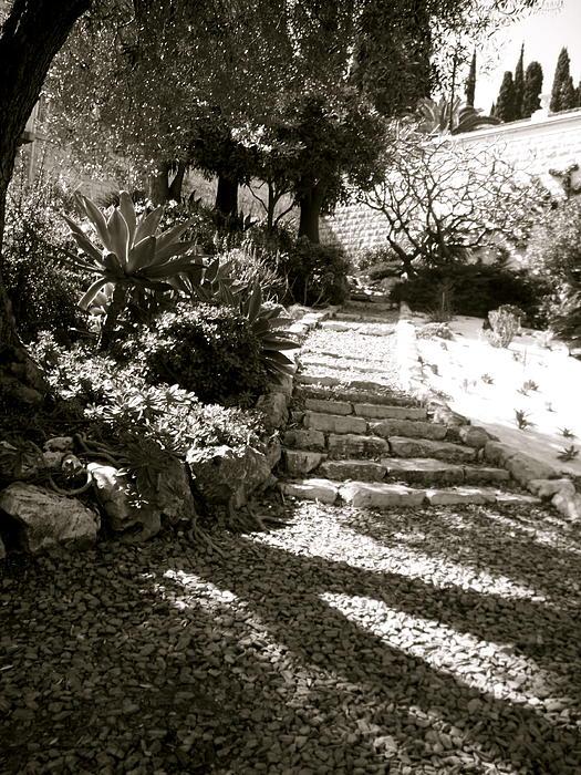 Katy Adebayo - Gardens on Mount Carmel