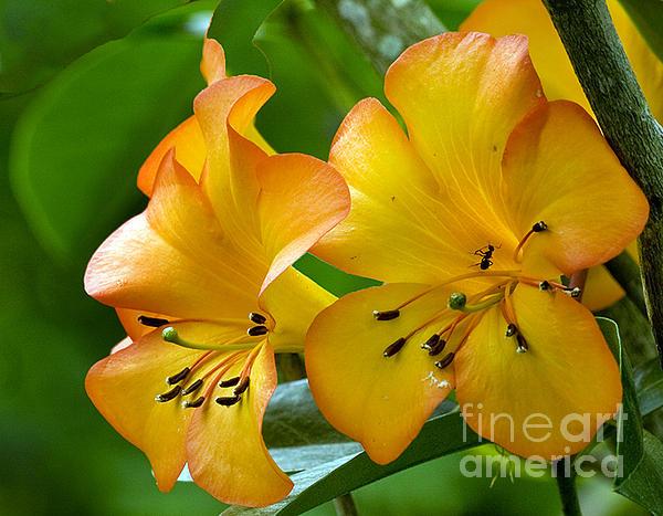 Darleen Stry - Golden Tropical Flowers