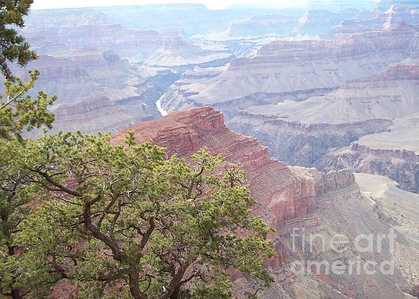 First name Last name - Grand Canyon Tree