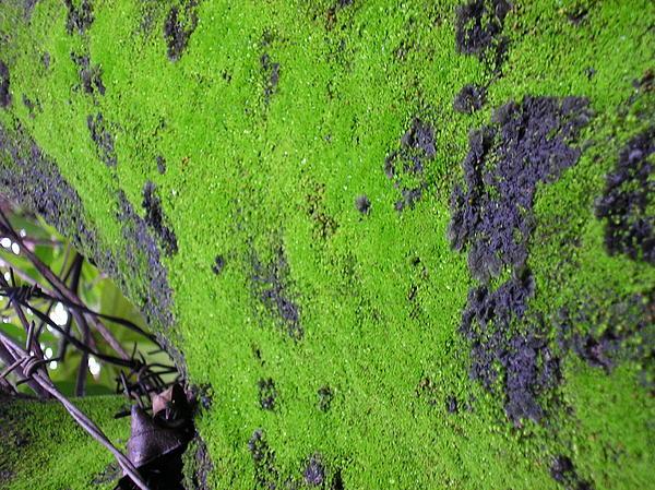 Demetrius Cotta - Green Art