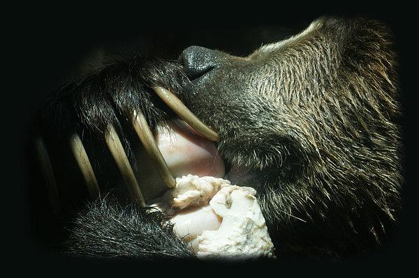 Ernie Echols - Grizzly Eating