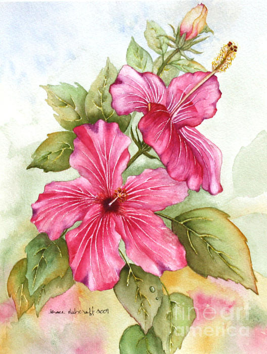 Grace Ashcraft - Hibiscus