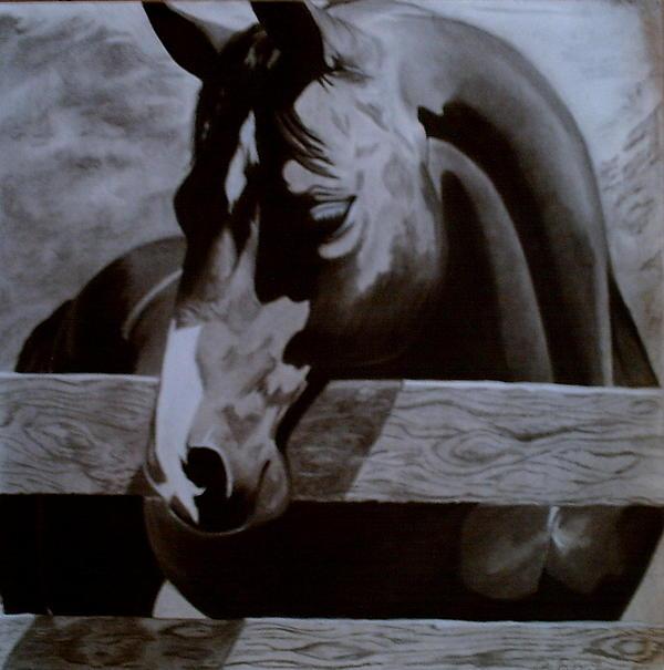 Catie Garza - Horse Behind Fence