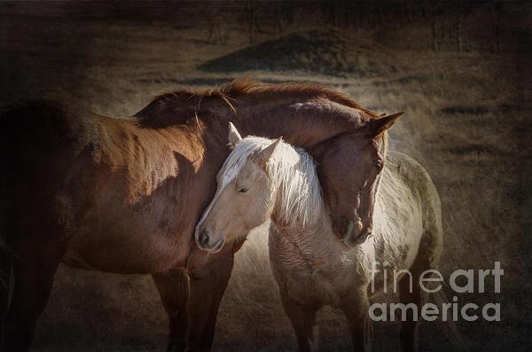 Prairie Poetry - Horse Hugs