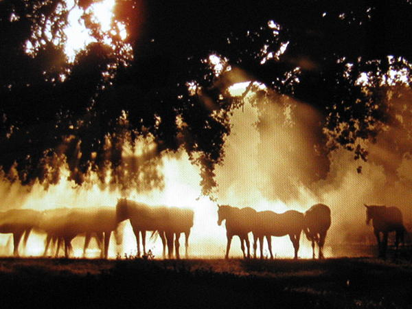 Shawn Hughes - Horses at dawn