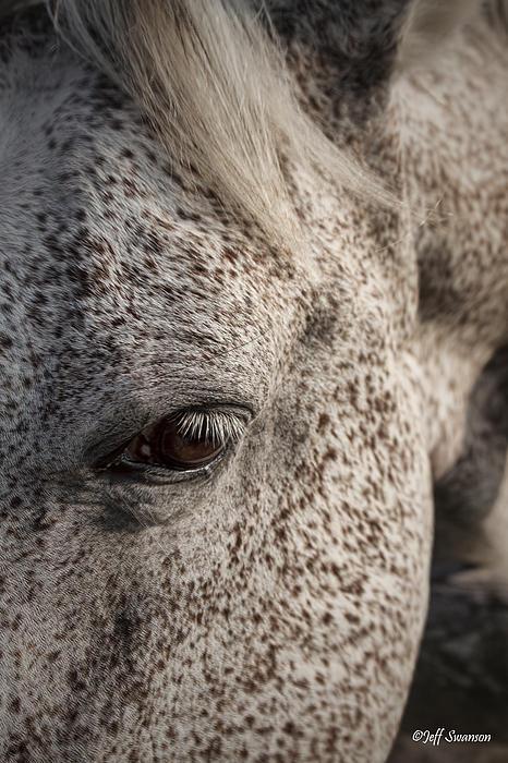 Jeff Swanson - Horse