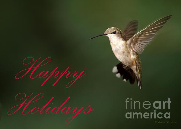 Sabrina L Ryan - Hummingbird Holiday Card