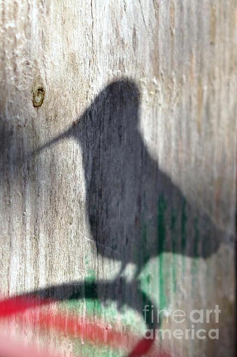 Laura Mountainspring - Hummingbird Shadow Silhouette