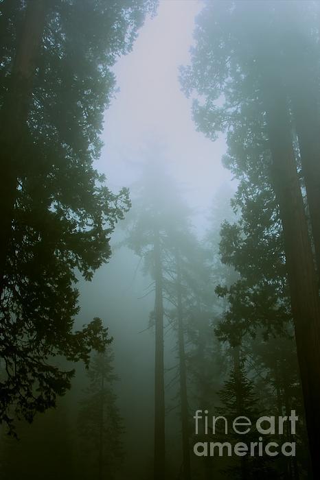Hideaki Sakurai - In the forest