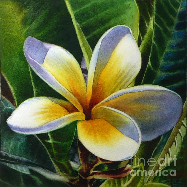 Arena Shawn - Island Beauty - White Plumeria