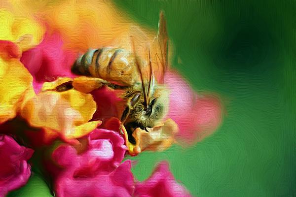 Heidi Smith - Just Bee-cause