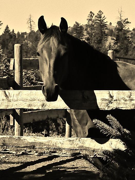 Barbara St Jean - LaBounty Quarter Horse