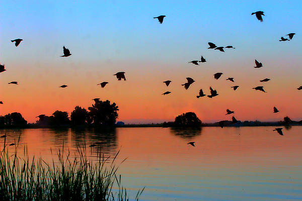 JL Creative  Captures - Lake Sunset
