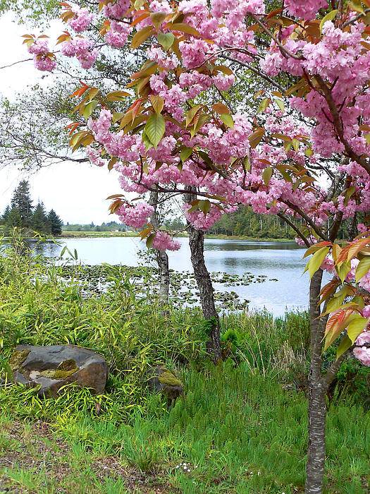 Pamela Patch - Lakeside Spring Color