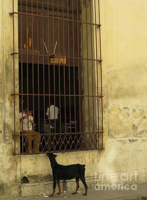 Stav Stavit Zagron - Life On The Street