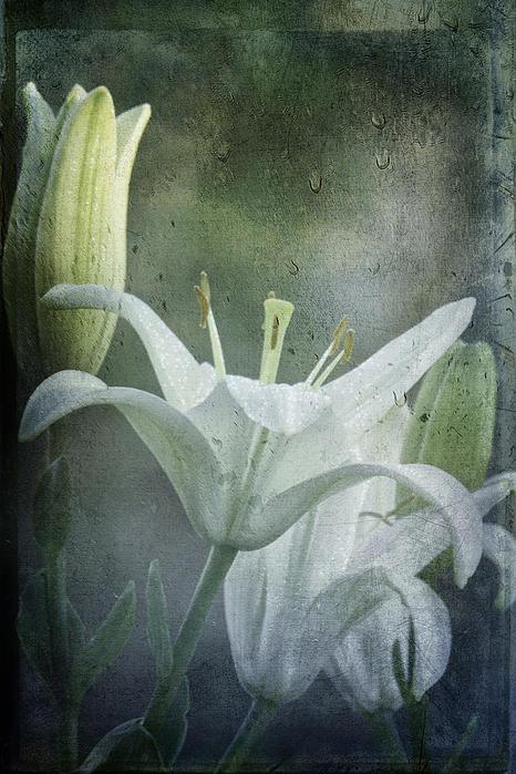 Diane Schuster - Lilies Through A Rainy Window