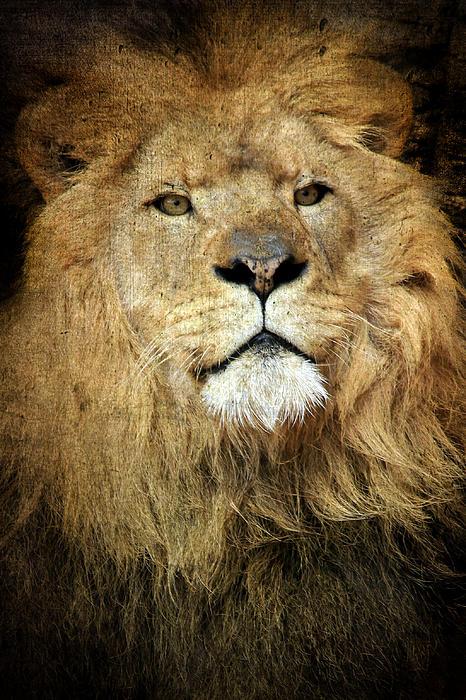 Lynn Whitt - Lion