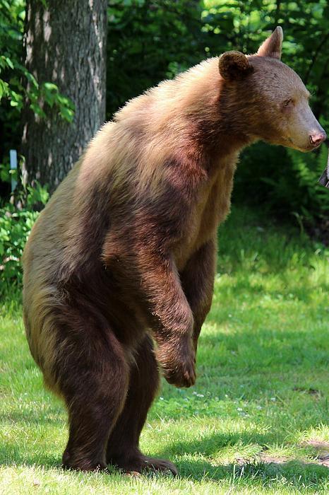Janara  Hoppock  - Little Bear What Do You See