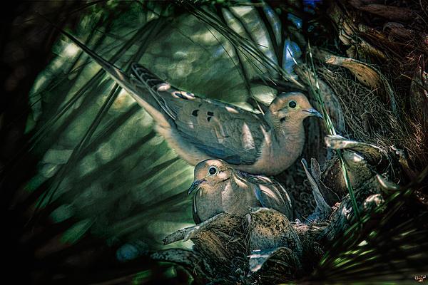 Chris Lord - Love a Dove Dove